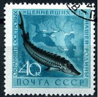 Bild von СССР 1959 г. Сол# 2331 • Ценные виды рыб • 40 коп. • осетр • Used(ФГ) XF