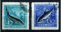 Bild von СССР 1959 г. Сол# 2331-2 • Ценные виды рыб • Used XF • полн. серия