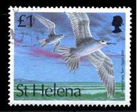 Изображение Святой Елены о-в 1993 г. SC# 608 • 1 £ • Птицы • простая крачка-фея • Used XF ( кат.- $5 )