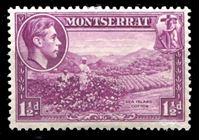 Bild von Монтсеррат 1938-48 гг. Gb# 103 • 1 ½ d. • Георг VI основной выпуск • первый выпуск (перф. - 13) • сбор хлопка • Mint NG XF ( кат.- £25 )
